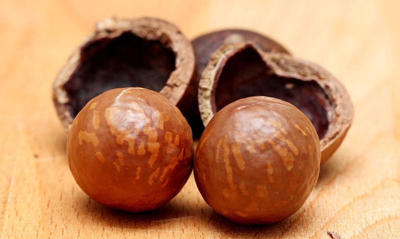 Can Birds Eat Macadamia Nuts Wildlifeful